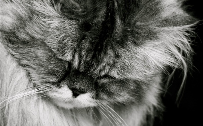 sad cat-Cute pet cat desktop pictures Views:13210