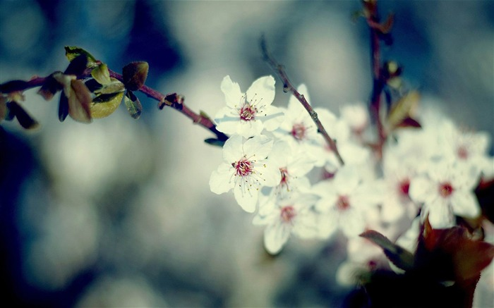 signs of spring-spring theme Desktop wallpaper Views:4833