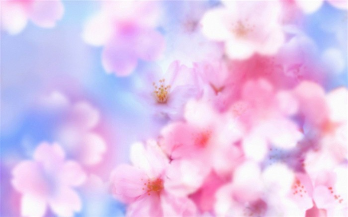 spring day-spring theme Desktop wallpaper Views:7426