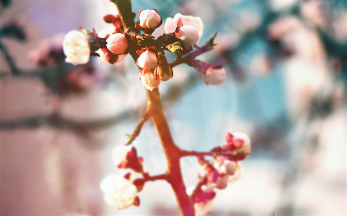 spring tree buds-spring theme Desktop wallpaper Views:3254