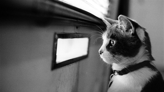 waiting cat-Cute pet cat desktop pictures Views:4022