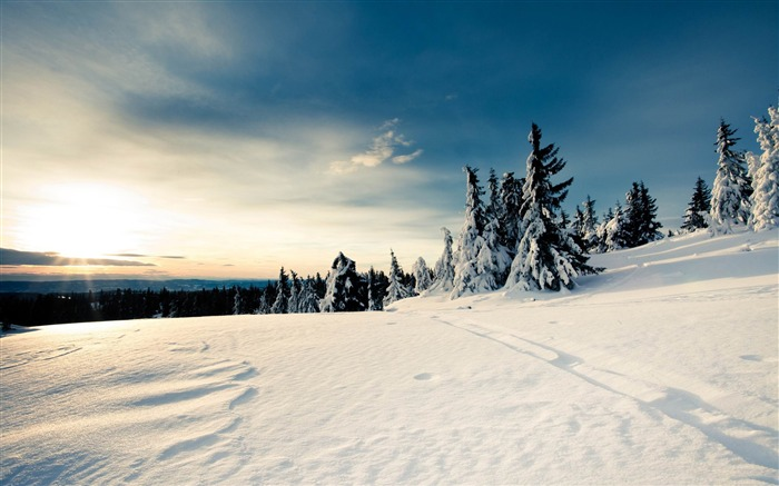 The cold winter will soon be over-winter snow theme wallpaper Views:9672