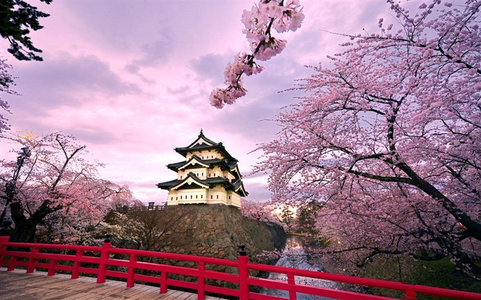 Beautiful Japanese cherry blossom season wallpaper 13 Views:13971
