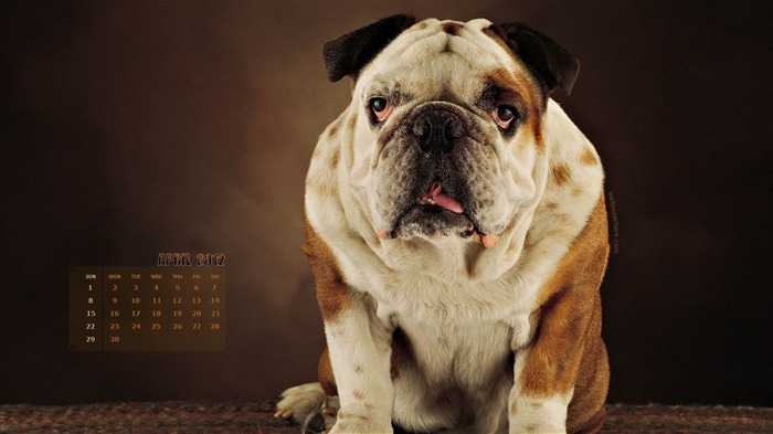 Dog-April 2012 calendar themes wallpaper Views:3815