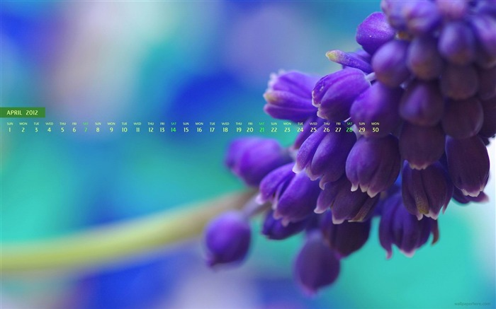 Flower purple-April 2012 calendar themes wallpaper Views:3982