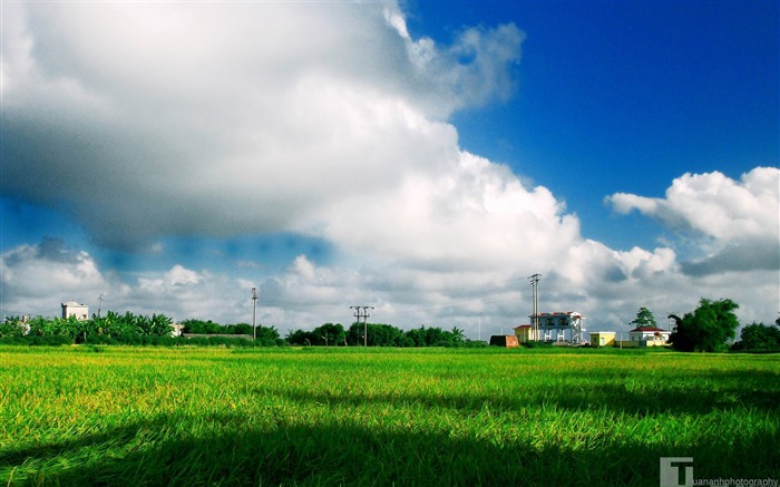 green field-The magnificent natural scenery wallpaper Views:10572