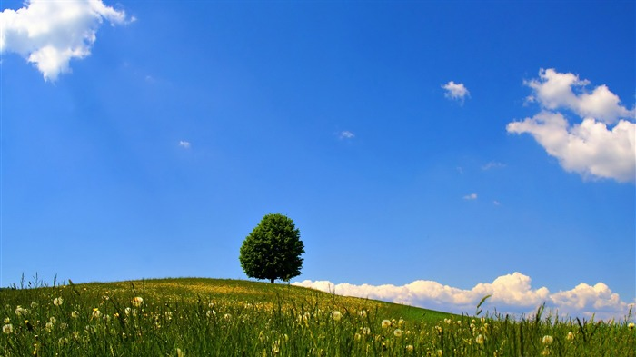 lonely tree-beautiful natural landscape wallpaper Views:4910
