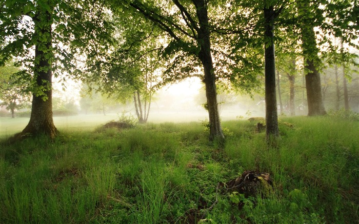 morning fog-The magnificent natural scenery wallpaper Views:5755