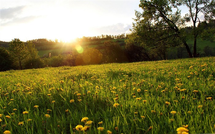 spring meadow-The magnificent natural scenery wallpaper Views:11275