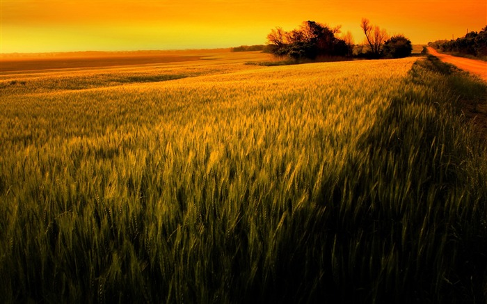 sunset over wheat field-beautiful natural landscape wallpaper Views:13892