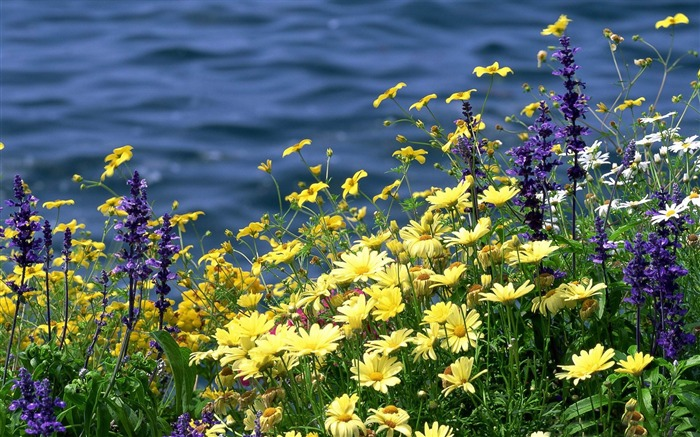 wildflowers and river-The magnificent natural scenery wallpaper Views:4565