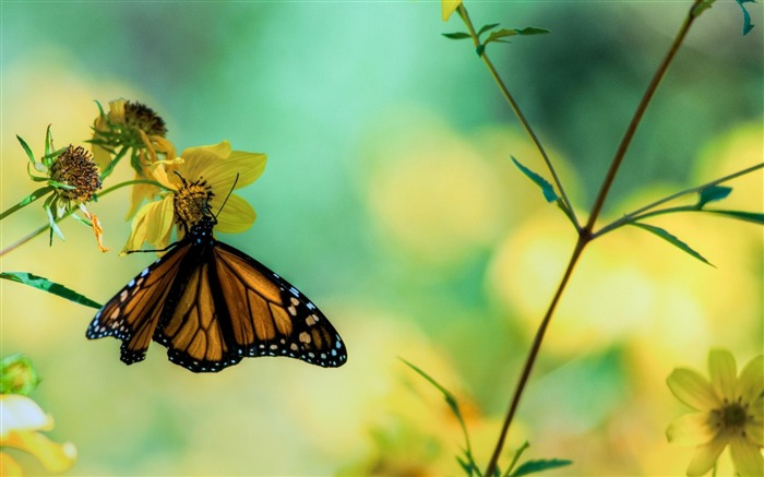 Butterfly Flower Macro-Animal photography wallpaper Views:6351