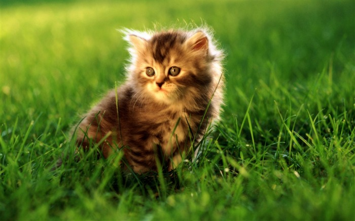 Cute Cats-Animal photography wallpaper Views:7666