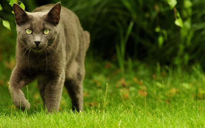 Green eyed hunter-Animal photography wallpaper Views:5303