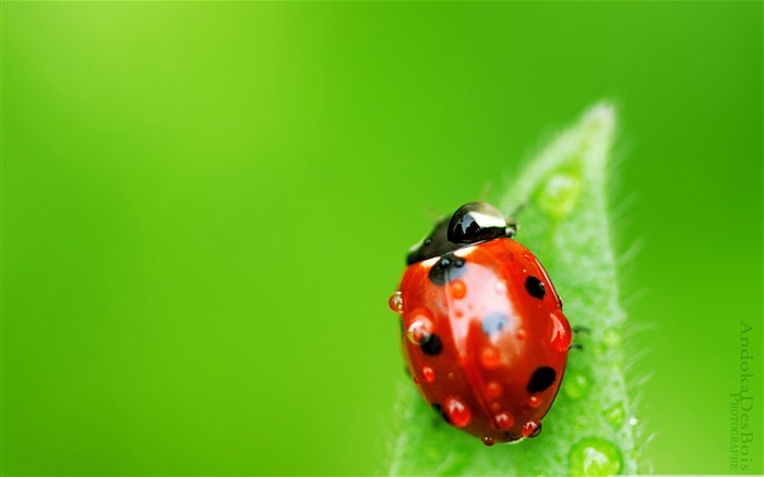small world-all kinds of insects wallpaper album Views:10904