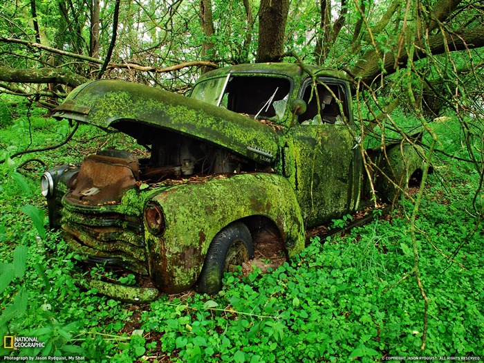Moss Covered Truck Michigan -National Geographic 2011 Best Wallpapers Views:14082