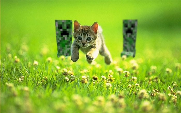 Running cat-Animal photography wallpaper Views:17175