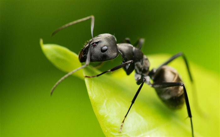 Small ant-Animal photography HD wallpaper Views:46174