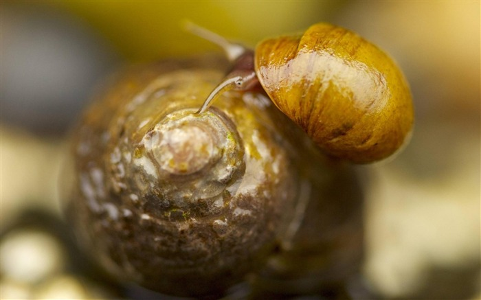 Snail-Animal photography wallpaper Views:4003