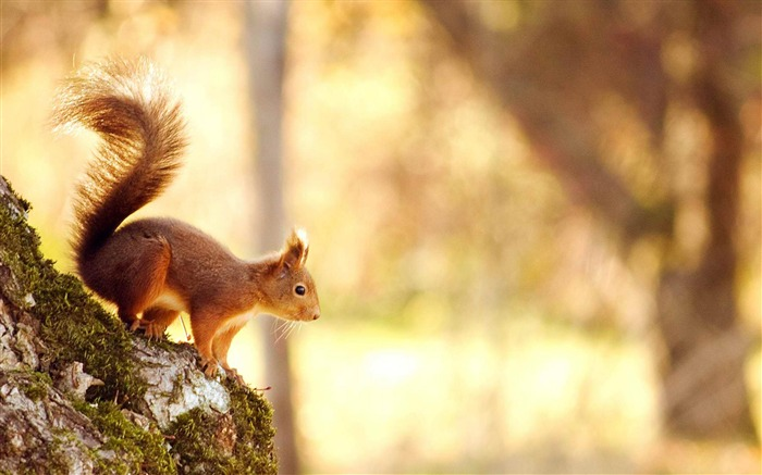 Squirrel-Animal photography HD wallpaper Views:6869