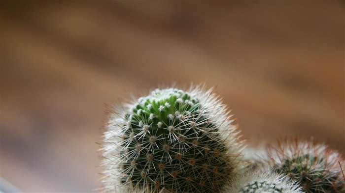 cactus-Plants photography HD wallpaper Views:4725