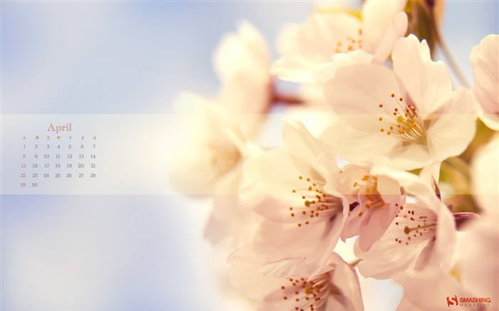 cherry-April 2012 calendar themes wallpaper Views:9320