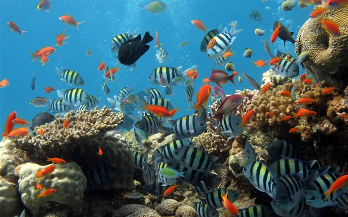 coral reef fish-Animal photography wallpaper Views:108269