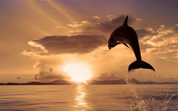dolphin-Animal photography HD wallpaper Views:13709