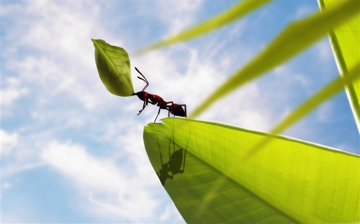 hardworking ant-all kinds of insects wallpaper Views:6416