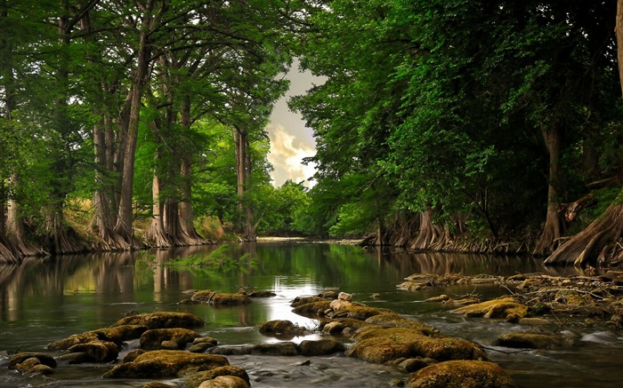 River Forest-Natural scenery wallpaper Views:12085