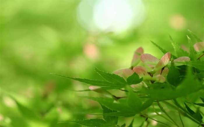 Spring Green Leaf-natural plant wallpaper Views:9459