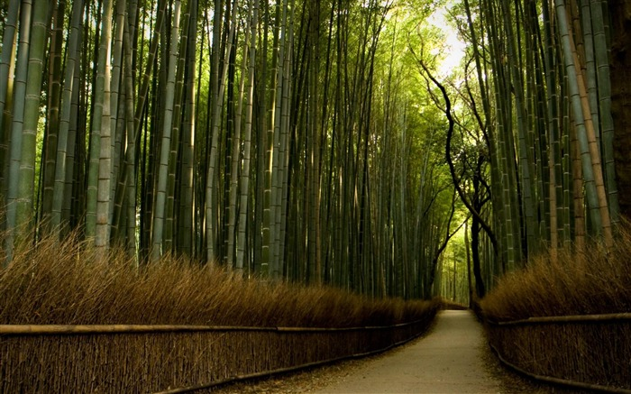 bamboo forest-High Quality wallpaper Views:24652