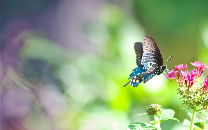 beautiful butterfly-Animal photography wallpaper Views:16487