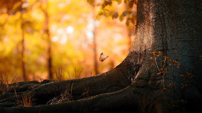 butterfly wood-Natural landscape wallpaper Views:3763