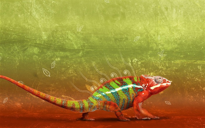 colorful chameleon-Animal photography wallpaper Views:9245