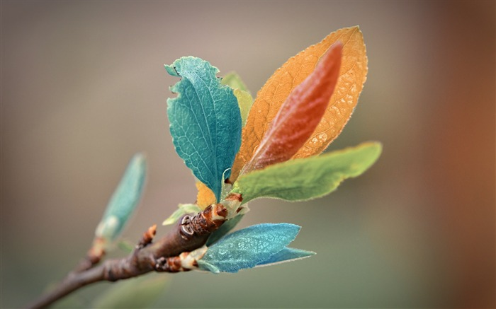 colorful leaves-natural plant wallpaper Views:4662