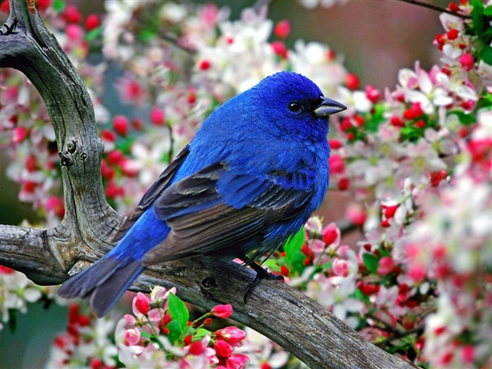 colorful little bird-Animal photography wallpaper Views:10412