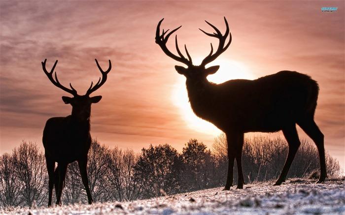 鹿-动物高清壁纸 预览