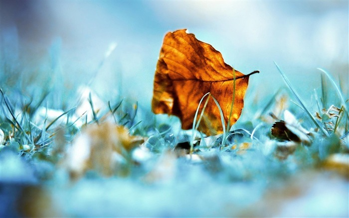 dry leaf ground-Nature Landscape Wallpaper Views:4525