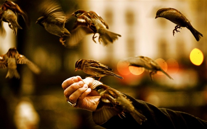 feed the birds-High Quality wallpaper Views:5375