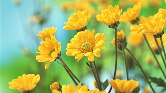 Beautiful yellow flowers-Flowers photography Wallpaper Views:5305