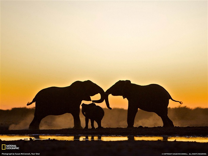 Elephant Namibia-National Geographic wallpaper Views:18657