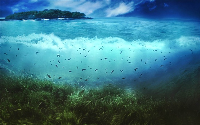 aquatic life-Aero Creative wallpaper Views:6083