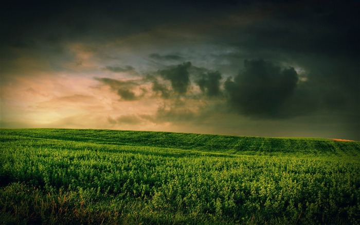 beautiful green grass field-Aero Creative wallpaper Views:7891