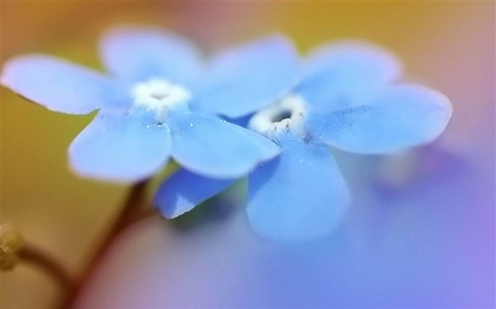 blue flower beauty-Flowers photography Wallpaper Views:3994