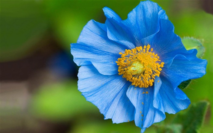 blue flowers-Flowers photography Wallpaper Views:3696