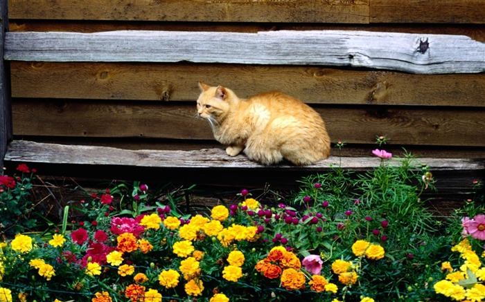 cat and flowers-Cat photography wallpaper Views:8128