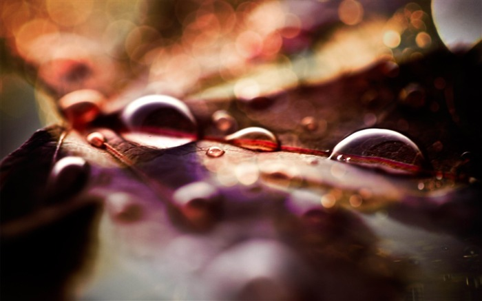 fall leaves and raindrops-Autumn landscape wallpaper Views:5608