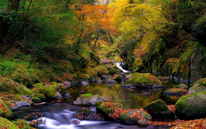 forest creek autumn-natural landscape wallpaper Views:29293