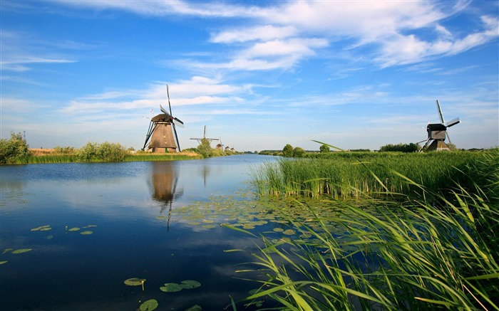 holland river windmill-natural landscape wallpaper Views:16476